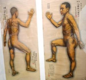 Discopatia e agopuntura omeopatica